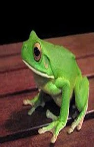 Frog Scratch Card for Kids screenshot 1