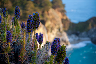 Photo: I had to stop by this place in Big Sur. You can see the 80 foot falls seen from this trail as McWay Creek cascades onto the shore. The flowers and plants are so beautiful here in California. It's been a great couple of days. I got to attend a couple of days at the EG Conference in Monterey which was just awesome and tonight I'll be shooting at Treasure Island in San Francisco with a bunch of photographer friends. Fun stuff!