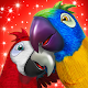 Talking Parrot Couple Free Download for PC Windows 10/8/7