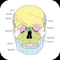 Anatomy Atlas Free icon