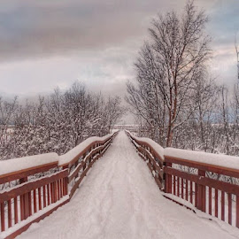 Snowy Boardwalk  by Patricia Phillips - Buildings & Architecture Bridges & Suspended Structures ( alaska boardwalks potter marsh  snow )