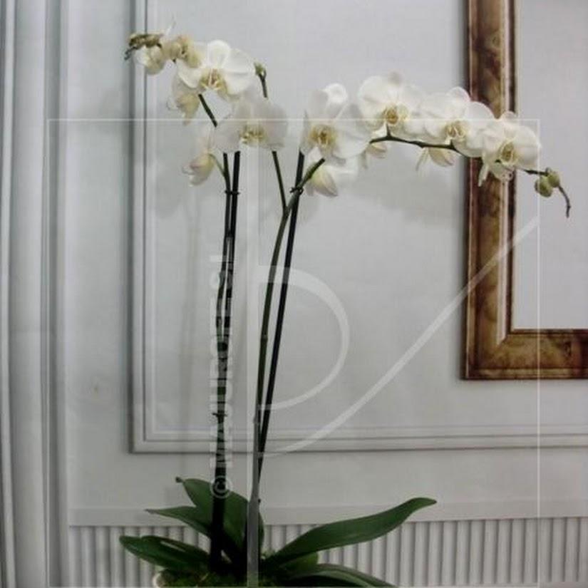 Cómo cuidar las orquídeas. Su reproducción