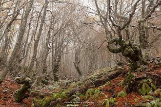 Photo: Hayedo de la Pedrosa. Ríofrío de Riaza. Segovia. Filtro: Polarizador
