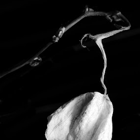Loneliness by Matteo Matthew Mori - Artistic Objects Still Life ( bn, still-life, nikon, flower )