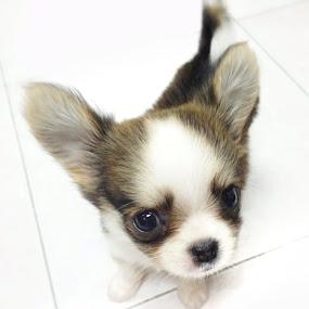 My dog by Phattana Sangsawang - Animals - Dogs Puppies