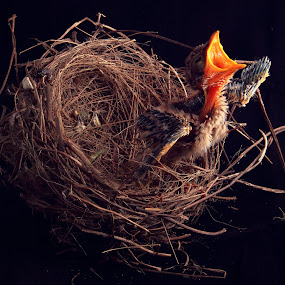 by Irvan Darmawan - Animals Birds
