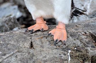 Photo: Happy Feet!