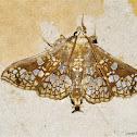 Assembly Moth