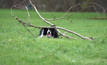 Photo: Bas MOET vaak ergens onder liggen...:)