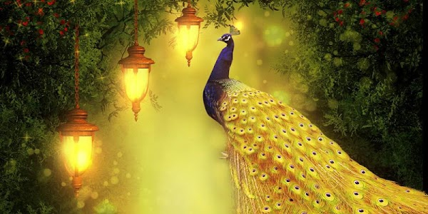 Golden Peacock Queen screenshot 3