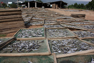 Photo: Year 2 Day 19 - Fish Drying on the Road to Ca Na