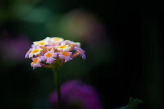 Photo: Colour my world  #FloralFriday by +Tamara Pruessner+Eustace James+Kiki Nelson+Beth Akerman #breakfastclub  #flowerphotography  #nikonphotography  #macrophotography  +Breakfast Art Club+Nik Photography+My Nikon Life