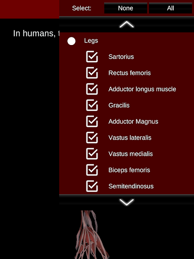 Muscular System 3D (anatomy) 2.0.8 Screenshots 21