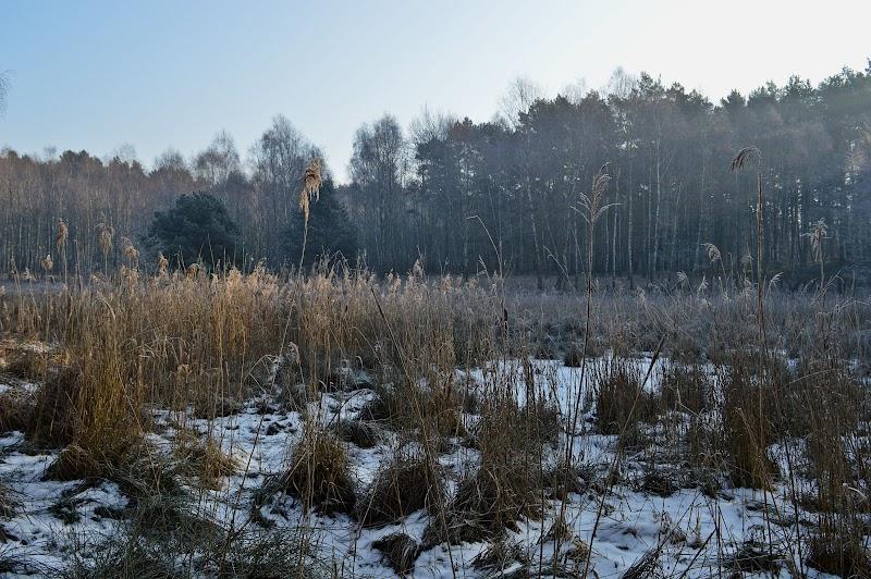 [Fot. 3] Staw Fryze | Wygoda (gm. Wielka Nieszawka, pow. toruński), 2017
