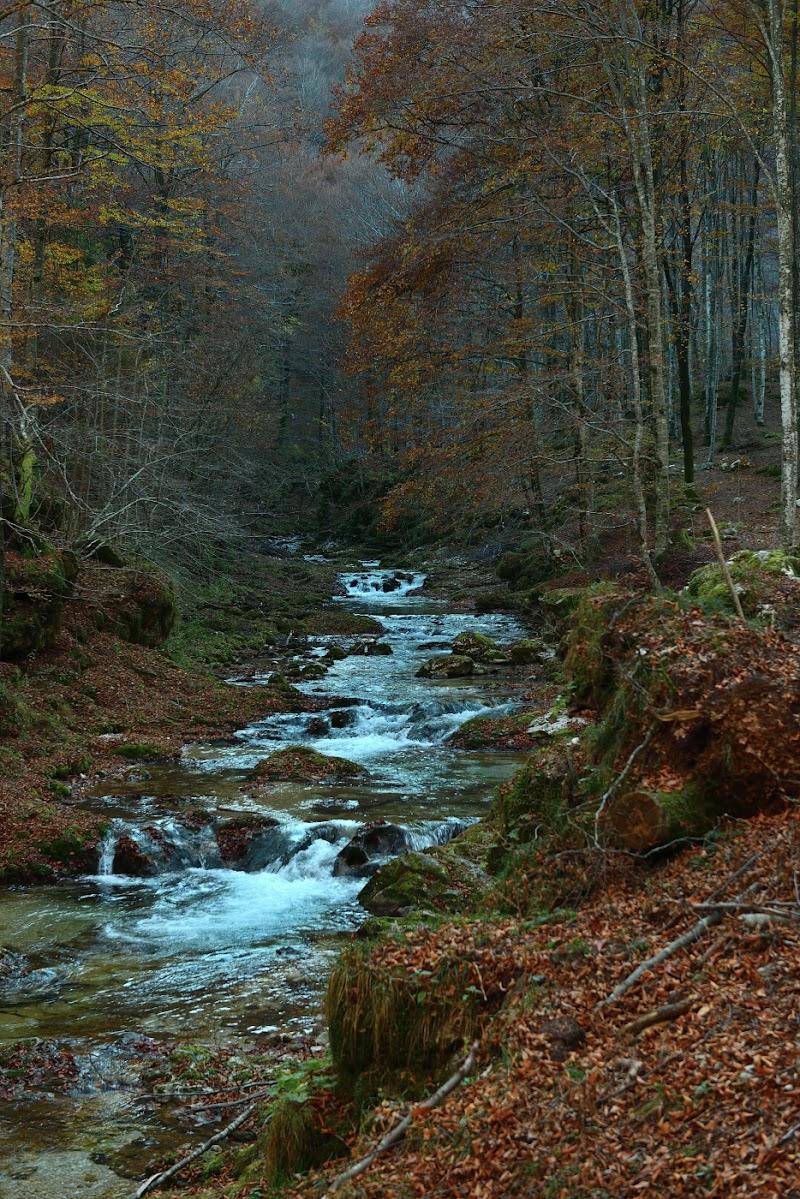 Cadono le foglie... di Matteo Faliero