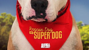 Rescue Dog to Super Dog thumbnail