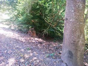 Photo: Another stump