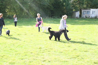 Photo: Lorraine with Maggie Lab X, Catherine with Pringle Lab and Lisa with Ralph Labradoodle