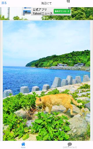 無料摄影Appの猫島 青島 写真集 Cat Photo collection|記事Game