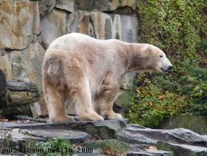 Photo: Knut informiert sich ueber das Geschehen bei den Nachbarn ;-)