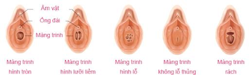 Giải đáp những bí mật về bộ máy sinh sản của phụ nữ