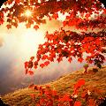 Autumn Full HD Wallpaper APK