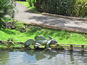 Photo: Grounds at Los Lagos, lizard on the lizard