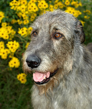 Photo: 10-09-2014 Franky head shot in front of Black - eyed Susans