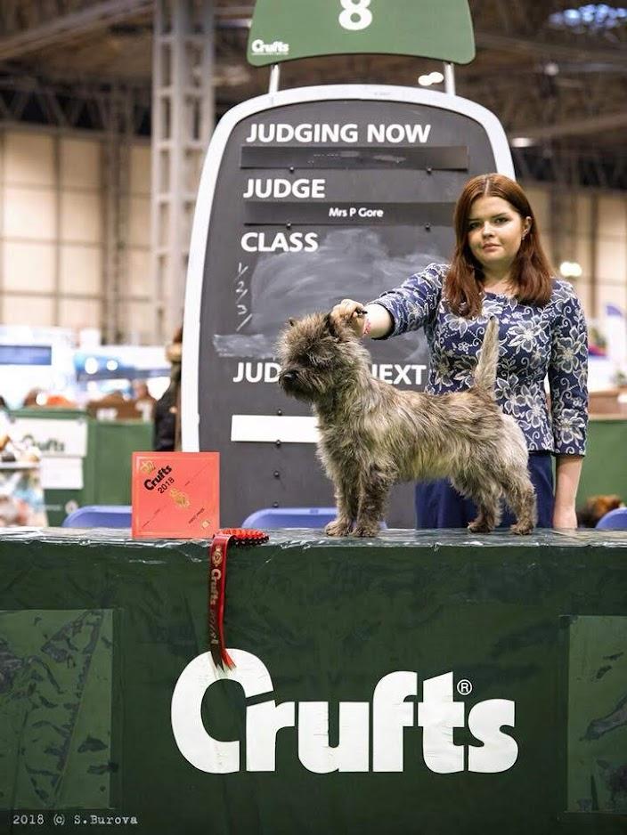 Фото керн терьера питомника Еливс с хендлером на призовом месте выставки. Собака Юный победитель Crufts.