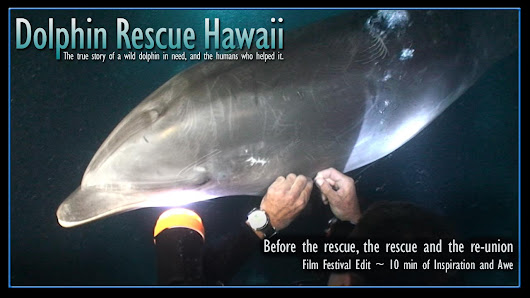Dolphin Rescue Hawaii - Film Festival Ed