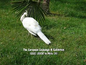 Photo: The EEE 2008 in Mira, Italy.