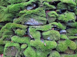 Photo: Mossy wall