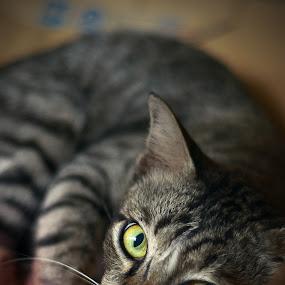 Please don't disturb me by Syafizul  Abdullah - Animals - Cats Portraits