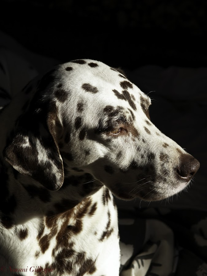 Can you spot me? by Naomi Gillespie - Animals - Dogs Portraits ( naomi gillespie )