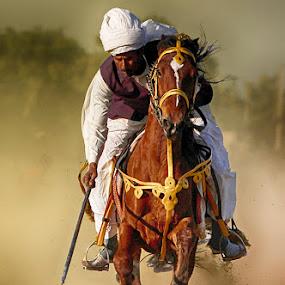 Chacha Grand by Abdul Rehman - Sports & Fitness Other Sports ( sand, natural light, desert, horse, sun, horseback, beautiful light, rally, thrill, pakistan, adventure, dust cloud, dangerous sport, horse riding, dust, sun light,  )