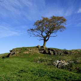 autumn skyline in Yorkshire by Brian Stott - Nature Up Close Trees & Bushes ( rocky tree, autumn, tree and sky, sandstone tree lin, cloudscape )