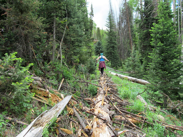 Tree fallen lengthwise along the trail