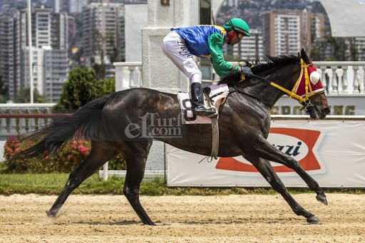 Be Royal (Scat Royal) se adjudica Condicional (1100m-Arena-VSC). - Staff ElTurf.com