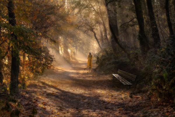 Un bosco da fiaba di angelo27