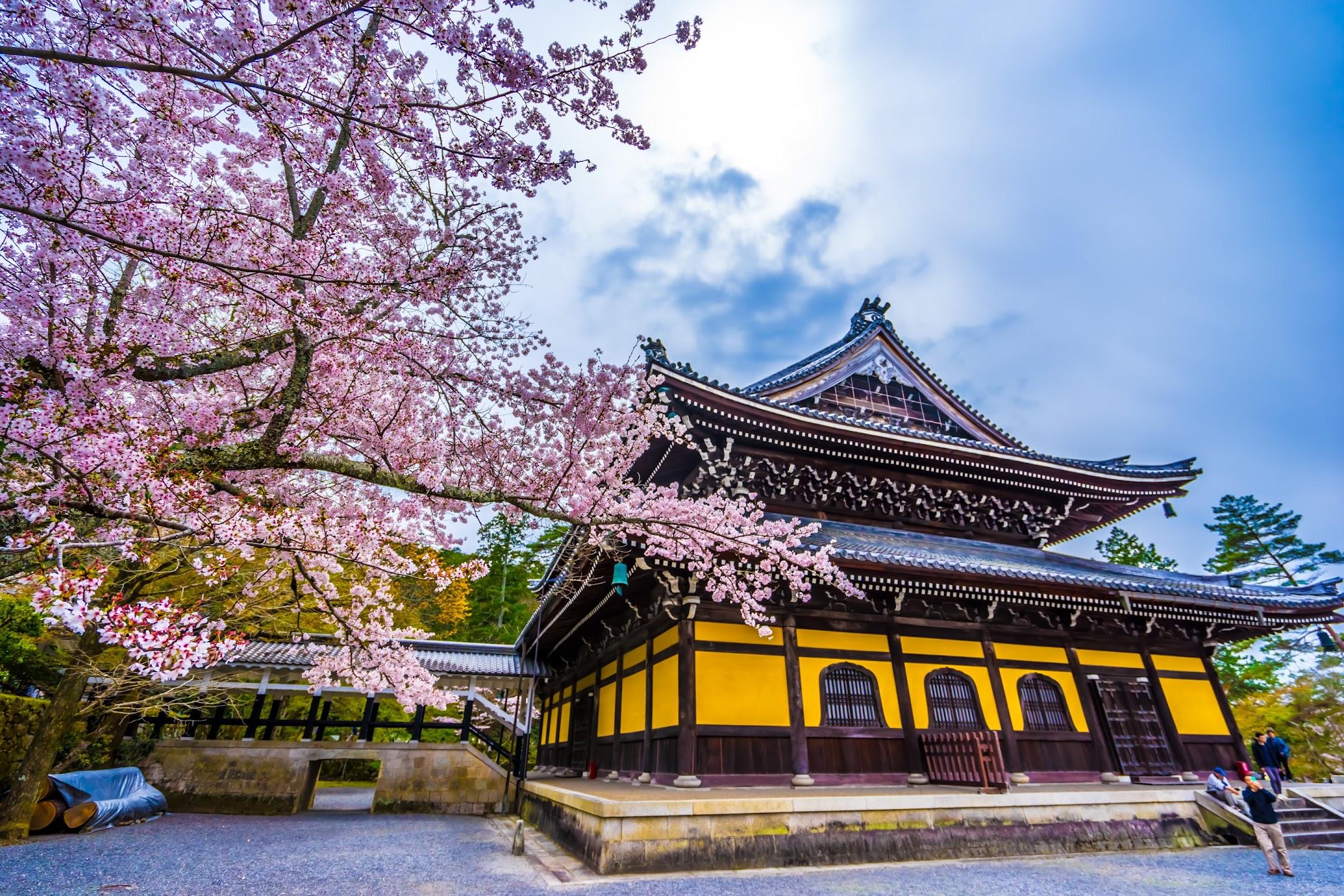 京都 桜 南禅寺1
