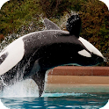Whale Pack 2 Live Wallpaper icon