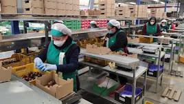 La actividad hortofrutícola ha suavizado la crisis en la provincia de Almería.