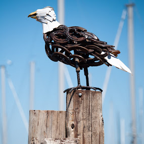Iron Eagle by Seth Brown - Buildings & Architecture Statues & Monuments