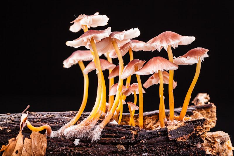 Funghi di Dario Lo Presti