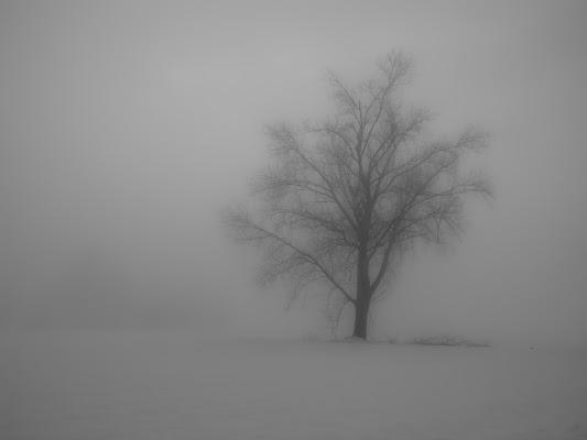 L'albero in sogno di trifoglio