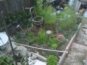 Photo: Lower East Corner (will be all Asparagus next year and an espalier apple tree