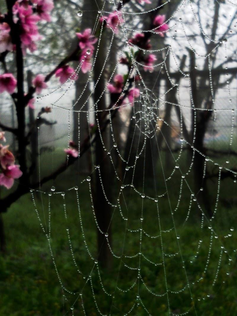 Spring drops di nena