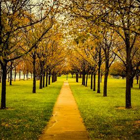 Symmetry of Autumn by Travis Wessel - City,  Street & Park  City Parks ( side walk, park, fall colors, autumn, fall, autumn colors, city park )