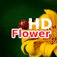 Wallpaper Beautiful Flowers HD for PC-Windows 7,8,10 and Mac