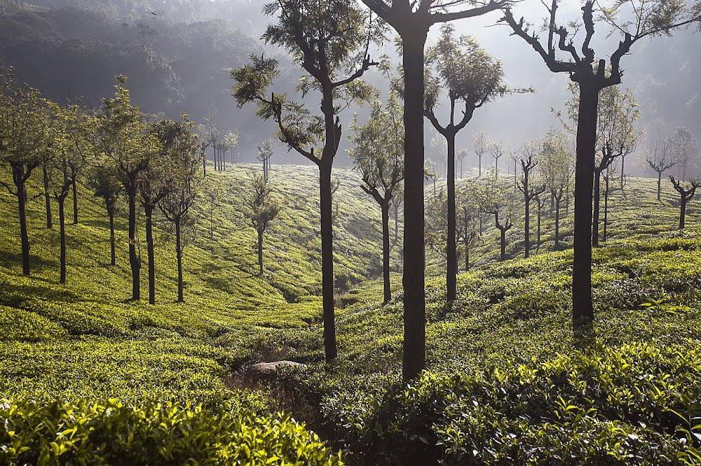 india-summer-destinations-Coonoor